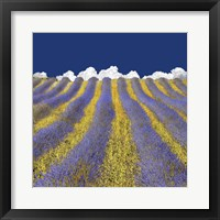 Lavender Heaven Fine-Art Print