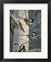Chickadees At Dawn Fine-Art Print