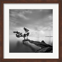 Water Tree Fine-Art Print
