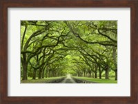 Oaks Avenue 1 Fine-Art Print