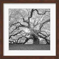 The Tree Square BW 2 Fine-Art Print