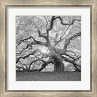 The Tree Square BW 2 Fine-Art Print
