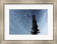 Lone Cedar Sky Fine-Art Print