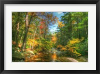Autumn Brook Fine-Art Print