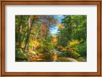 Autumn Brook Fine-Art Print