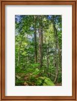 Forest Vertical Fine-Art Print
