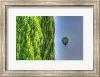 Tuscan Cedar and Balloon Fine-Art Print