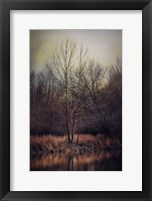 Warm Winter Peace Fine-Art Print