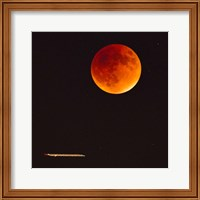 Moonlight Flight Fine-Art Print