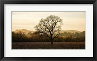 Wine Country Winter Fine-Art Print