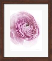 Pink Lady III Fine-Art Print