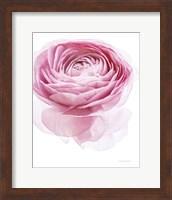Pink Lady I Fine-Art Print