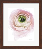 Pink Lady II Fine-Art Print