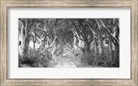 The Dark Hedges, Ireland (BW) Fine-Art Print