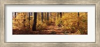 Trees in Autumn, Stowe, Lamoille County, Vermont Fine-Art Print