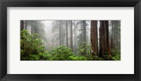 Trees in Misty Forest Fine-Art Print