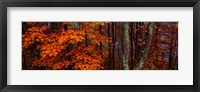 Trees in Forest, Great Smoky Mountains National Park, North Carolina Fine-Art Print