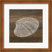 Rustic Shell - White Fine-Art Print