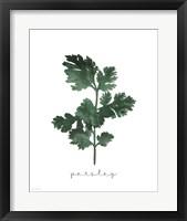 Parsley Fine-Art Print