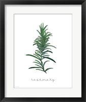 Rosemary on White Fine-Art Print