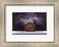 Lilacs of Nantucket Fine-Art Print
