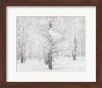 Snow Covered Cottonwood Trees Fine-Art Print