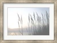 Morning Whisper II Fine-Art Print