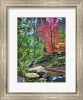 Peaceful Woods II Fine-Art Print