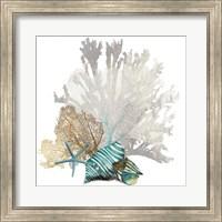 Coral Fine-Art Print