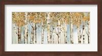 Birch Country Fine-Art Print