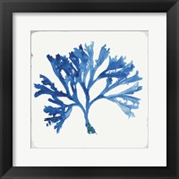 Blue and Green Coral IV Fine-Art Print