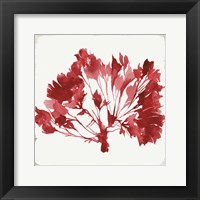 Red Coral IV Fine-Art Print