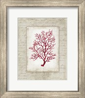 Red Coral III Border Fine-Art Print