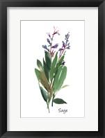 Sage I Fine-Art Print