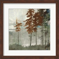 Spruce Woods II Fine-Art Print
