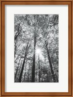 Autumn Forest I BW Fine-Art Print