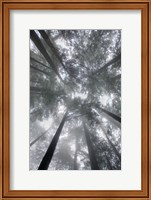 Fir Trees I Fine-Art Print