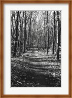 Through the Woods Fine-Art Print