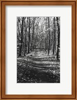 Through the Woods Fine-Art Print