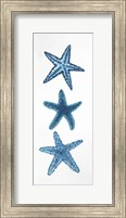 Starfish Fine-Art Print