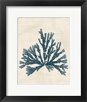 Pacific Sea Mosses IV No Map Fine-Art Print