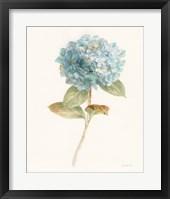Garden Hydrangea Fine-Art Print