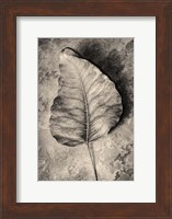 Dried Leaf Fine-Art Print