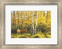 Whitetail Deer In Fall Fine-Art Print