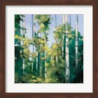 Birches Fine-Art Print