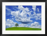 Oak and clouds, Bavaria, Germany Fine-Art Print
