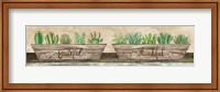 Grateful & Thankful Succulents Fine-Art Print