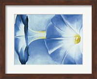 Blue Morning Glories Fine-Art Print