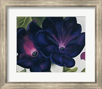 Black and Purple Petunias Fine-Art Print