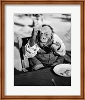 1930s Very Old Chimpanzee Fine-Art Print